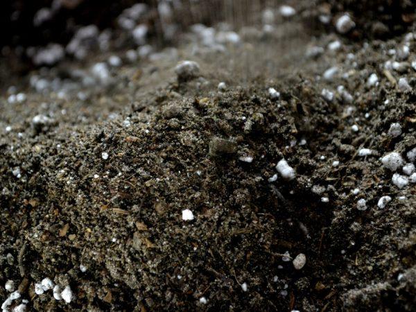 Närbild på mörk jord med vita pluttar i.