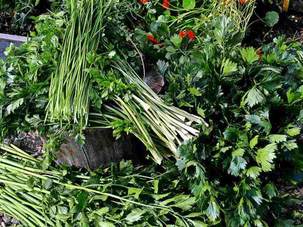 grönsaksblast