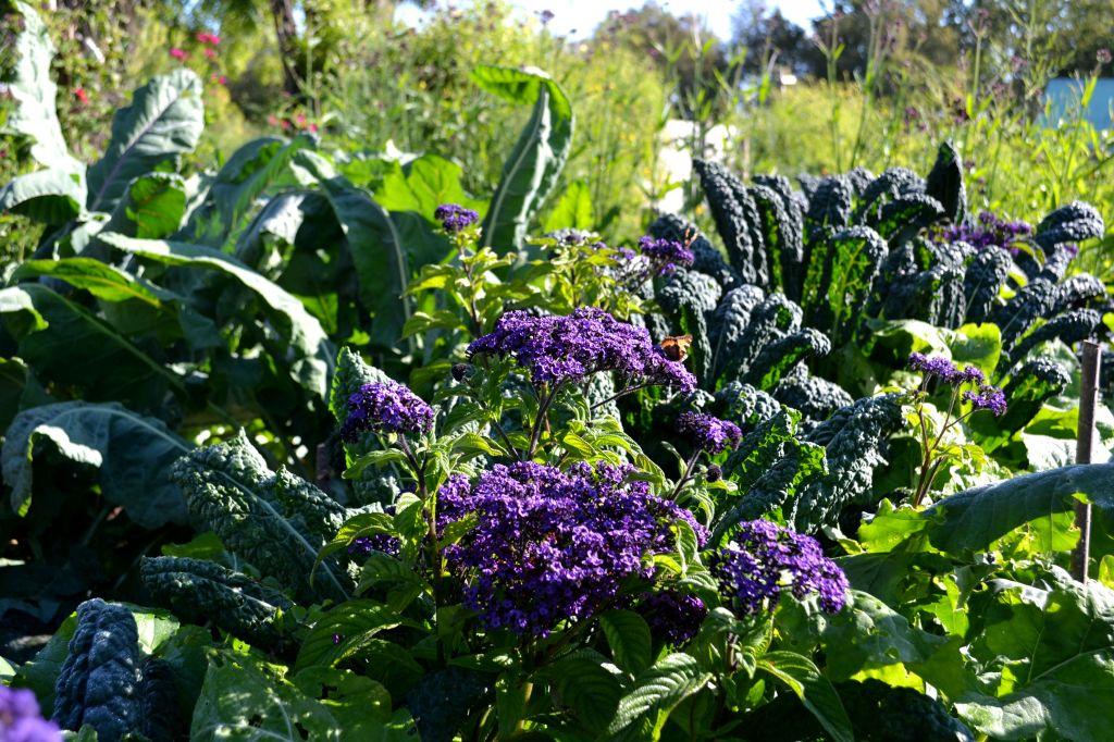 Samodling av grönsaker och sommarblommor