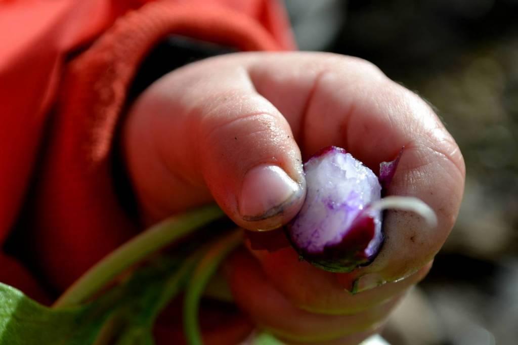 Barnhand med rädisa