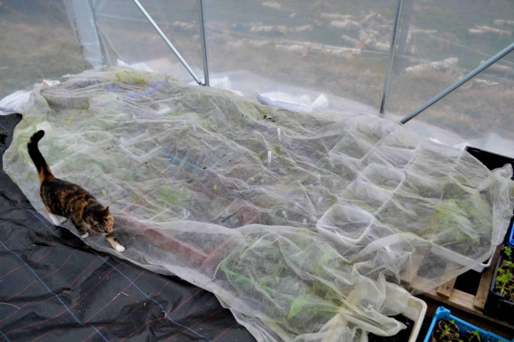 Odlingstunnel, växthustunnel