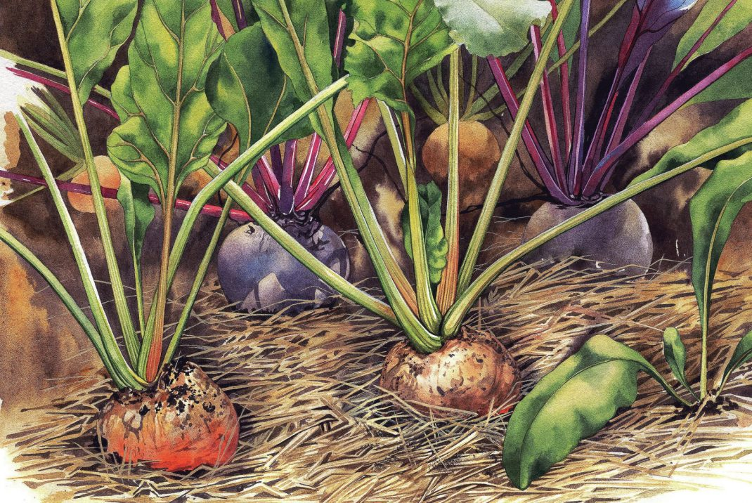 Akvarell av Tatiana Shirbidova ur boken Alla fingrar gröna av Theres Lundén och Johannes Wätterbäck.
