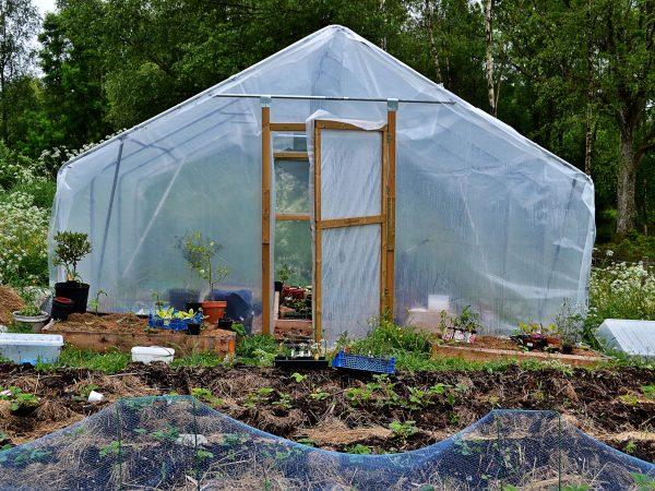 Tunnelväxthuset står i nedre delen av trädgården i halvskugga bakom en skogsdunge