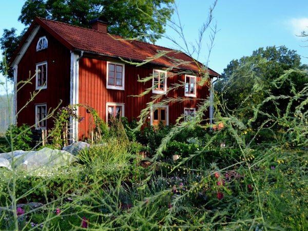 Köksträdgård i morgonljus med bostadshus i bakgrunden.