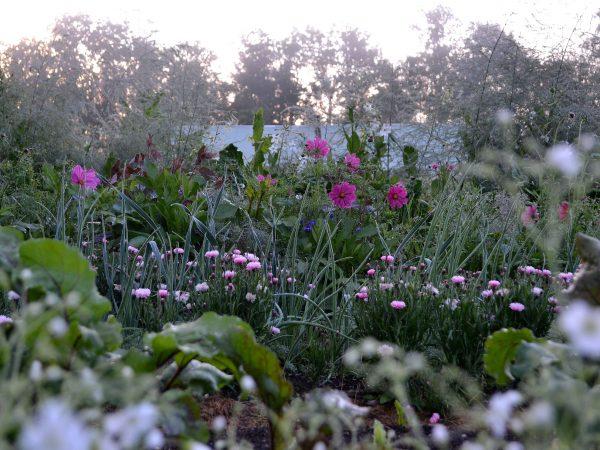 Blommor och grönsaker i tidigt, frostigt morgonsljus.