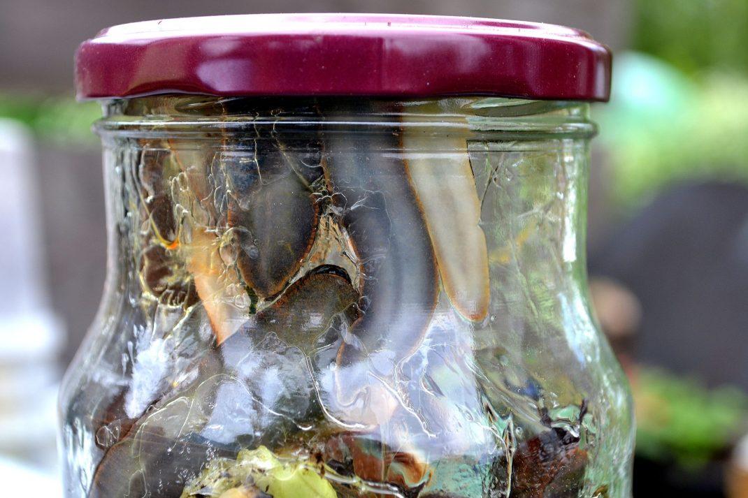 Sniglar i en glasburk