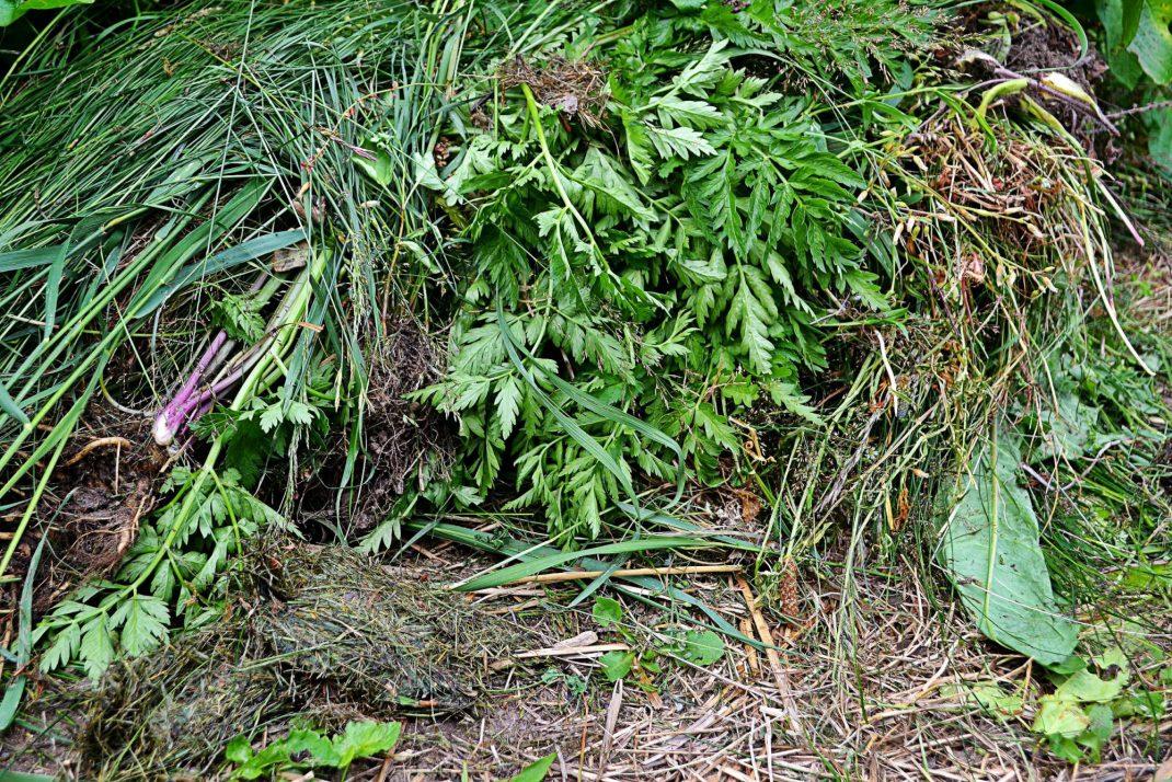 Ogräs ligger på toppen av en täckodlad bädd.