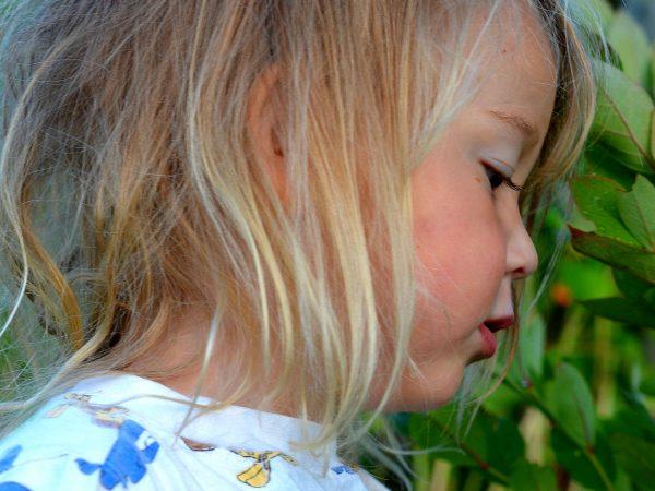 Ett litet barn plockar bär.