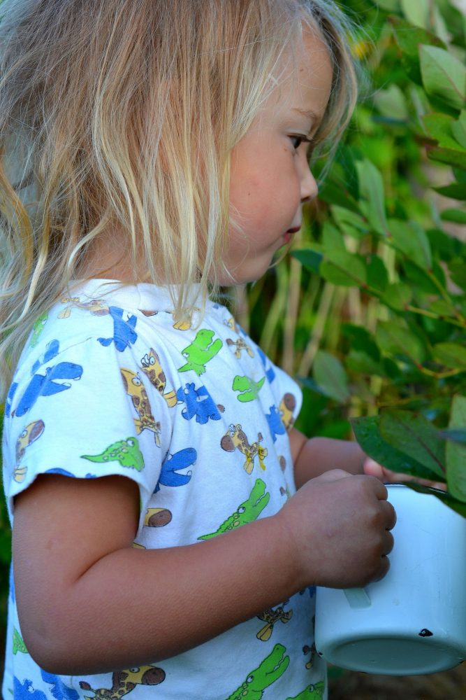 En liten tjej med långt ljust hår plockar blåbär.