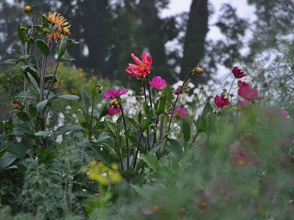 Köksträdgård och sommarblommor.