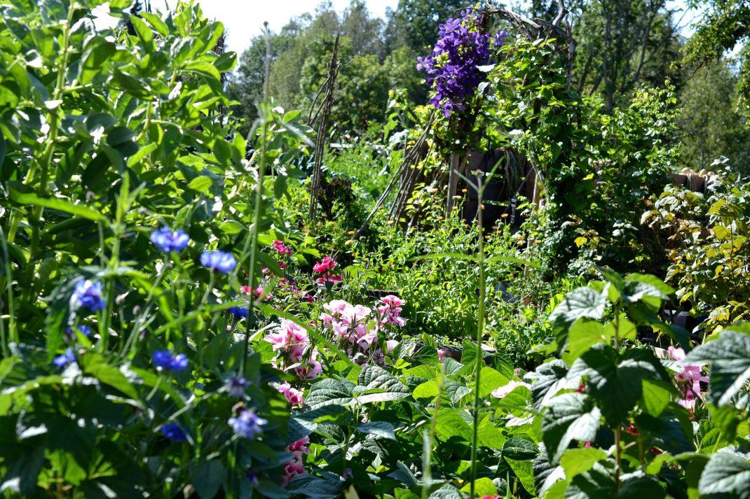 Sommarblommor bland grönsaker.
