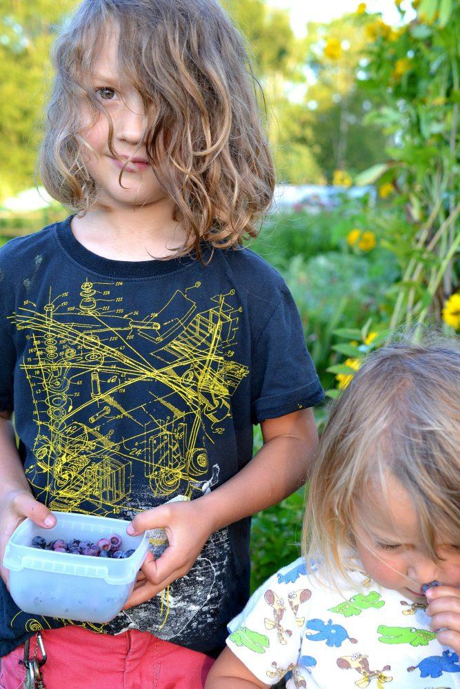 Barn med blåbär i små burkar i händerna.