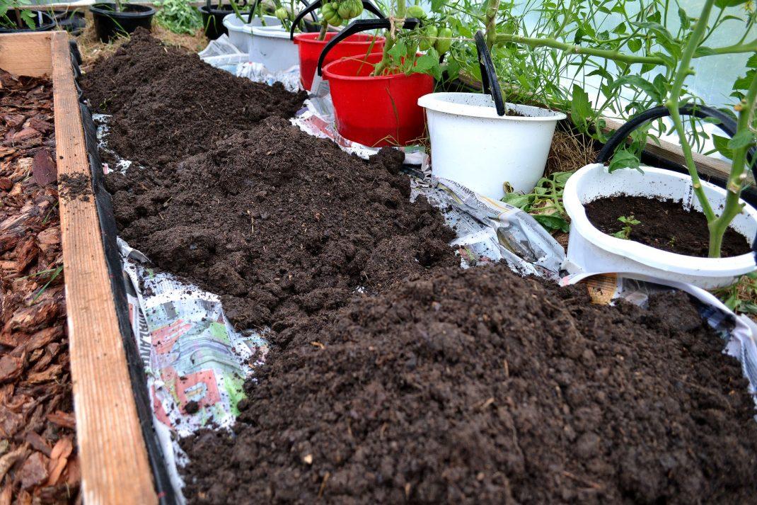 Jordhögar över de blötlagda tidningarna. Getting rid of couch grass, piles of soil.