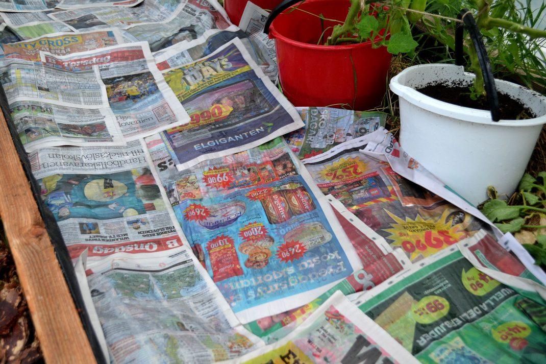 Tidningar ligger i en odlingsbädd.