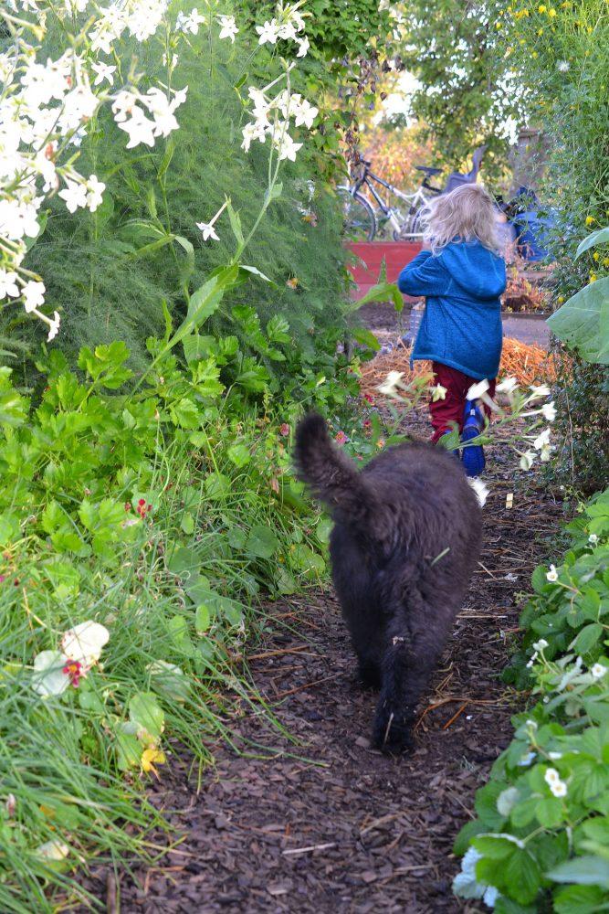 Barn springer mellan grönsaksbäddarna med en valp i släptåg.