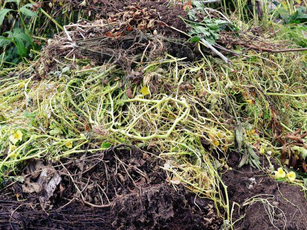 Gammalt växtmaterial i olika nyanser ligger i en hög.
