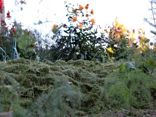 En täckt bädd mellan sparris och sommarblommor i kvällsljus.