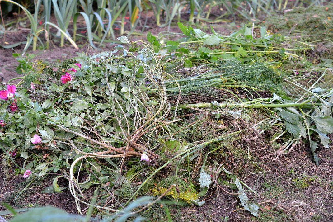 Växtdelar ligger på en odlingsbädd.