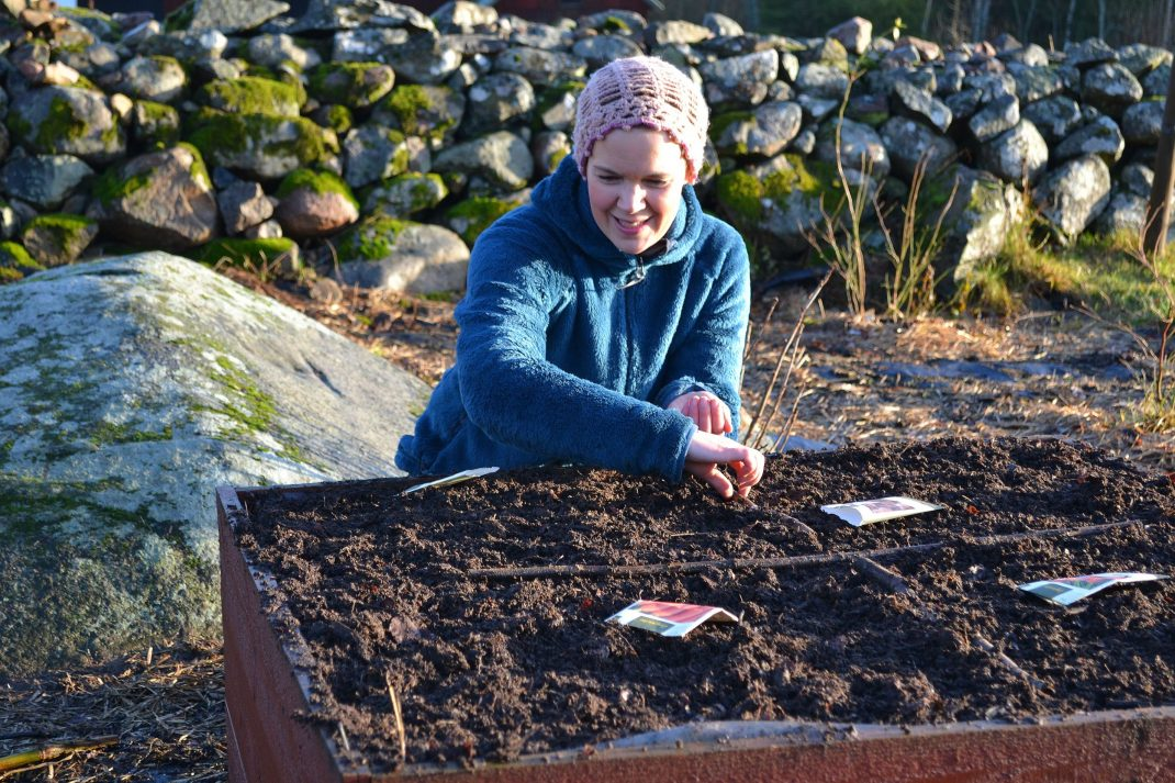 Sara höstsår grönsaker i en odlingslåda.