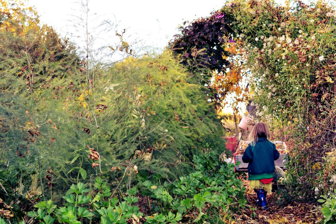 Ett litet barn går genom köksträdgården.