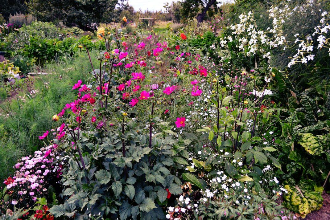 Höga sommarblommor i rosa toner står stolt i bädden.