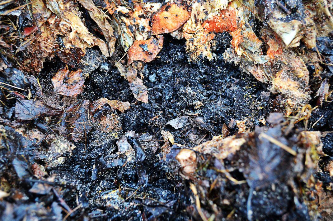 Jord, kompostrester och löv i pallkragen.