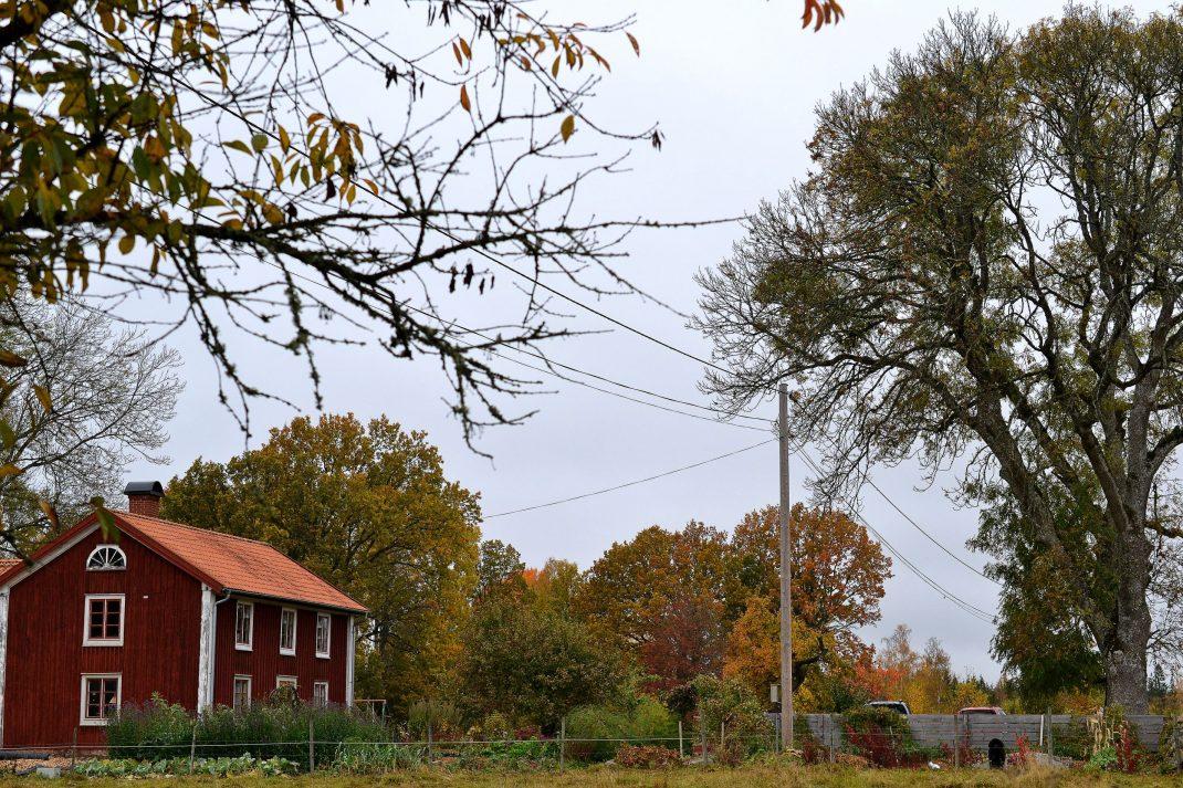 De stora askarna på framsidan är mer än dubbelt så höga som huset.