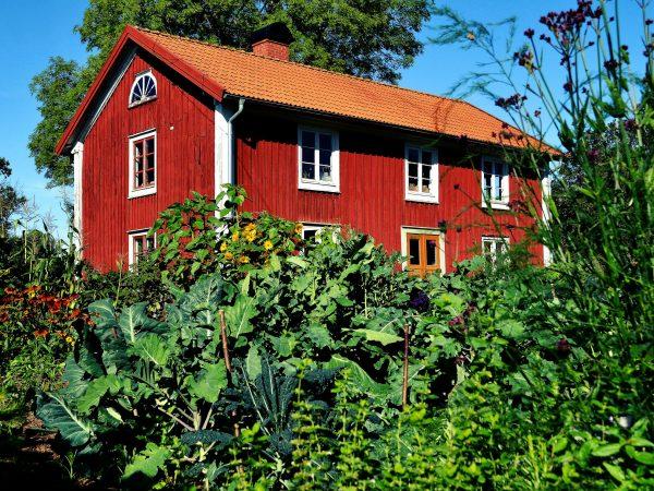 Det röda parhuset ligger inbäddat i grönska från köksträdgården. Bild från 2014.