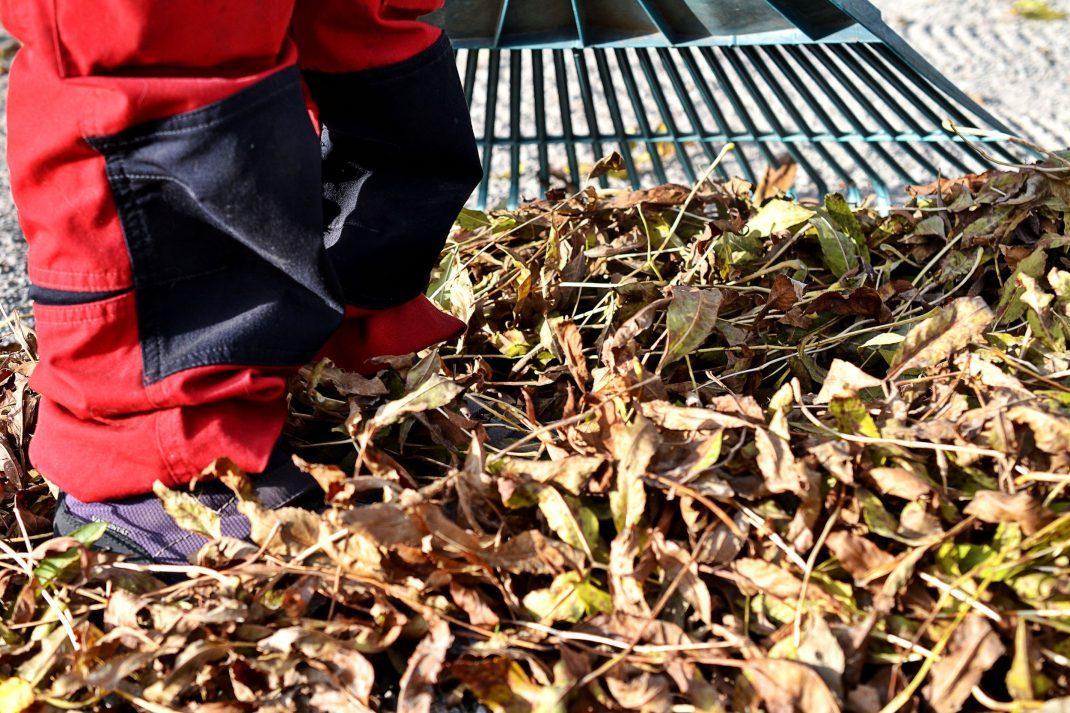 Ett barn i arbetsbyxor krattar löv.