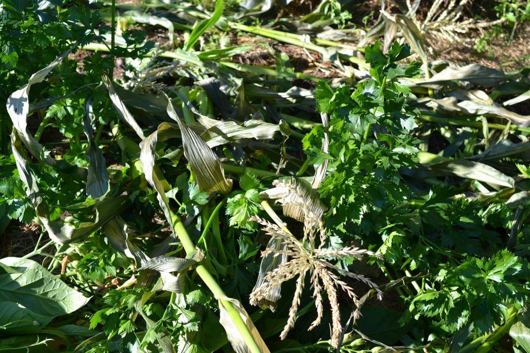 Växtdelar ligger utspridda på marken.