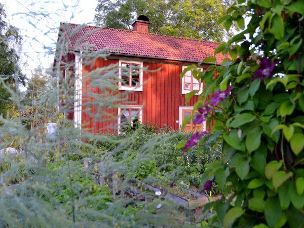Köksträdgård med morgonsol som lyser över husfasaden.