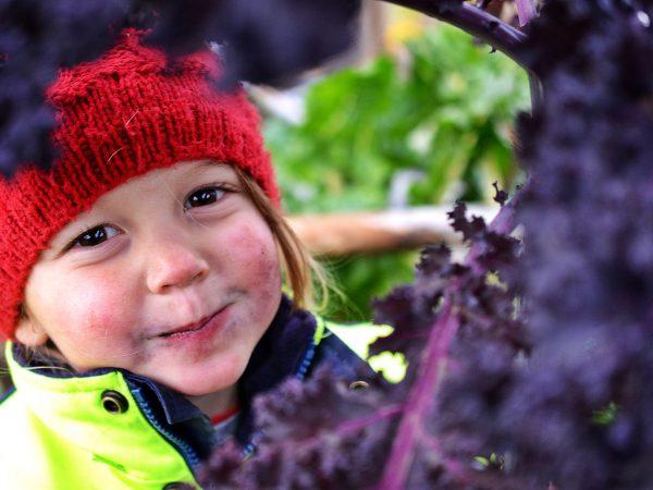 Alba sitter i mössa och reflexjacka under en hög planta med röd grönkål och smaskar.