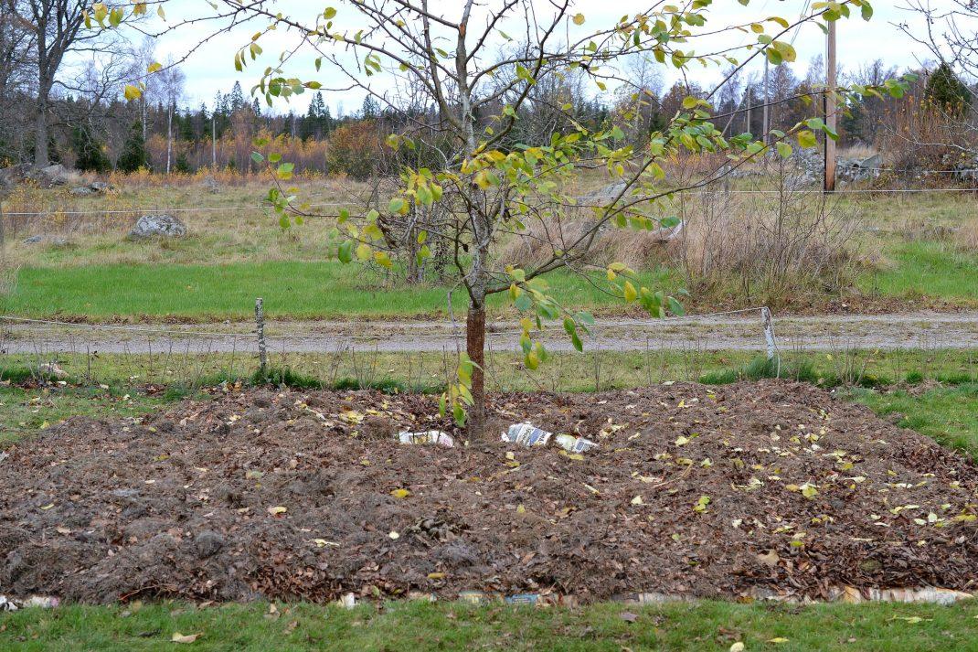 Täckodling rakt på gräsmattan för att skapa ny odlingsbädd.