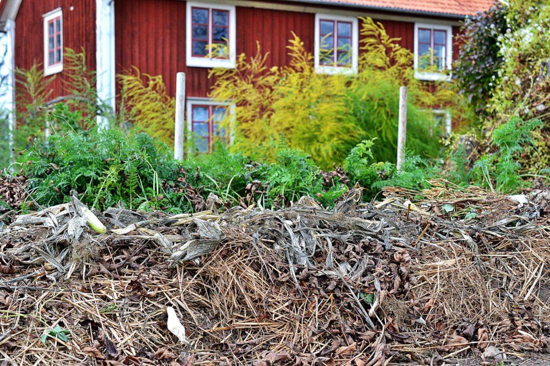 Mängder av växtmaterial ligger på en odlingsbädd i kökstädgården.