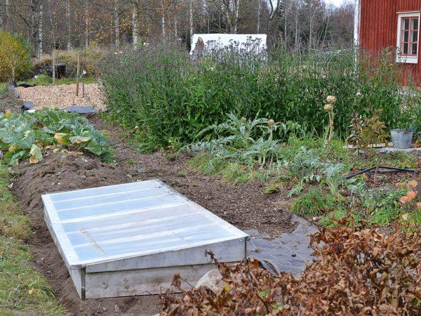 En lång kallbänk med lock syns i ena delen av köksträdgården.
