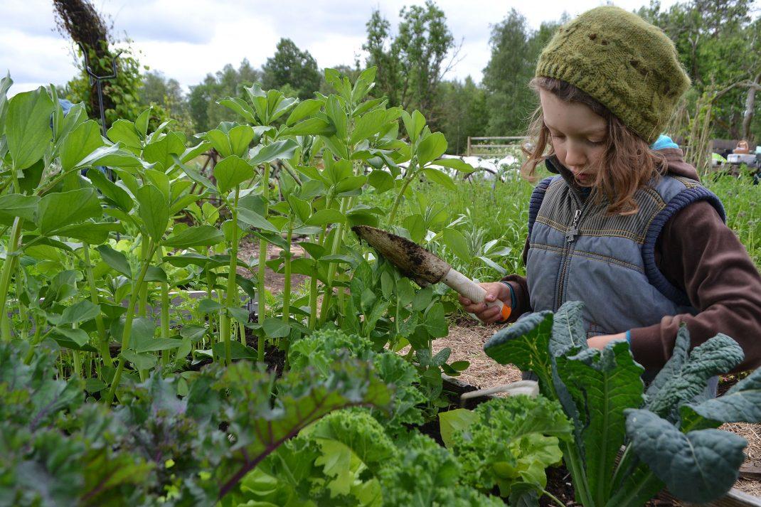 Barn som odlar i pallkrage.