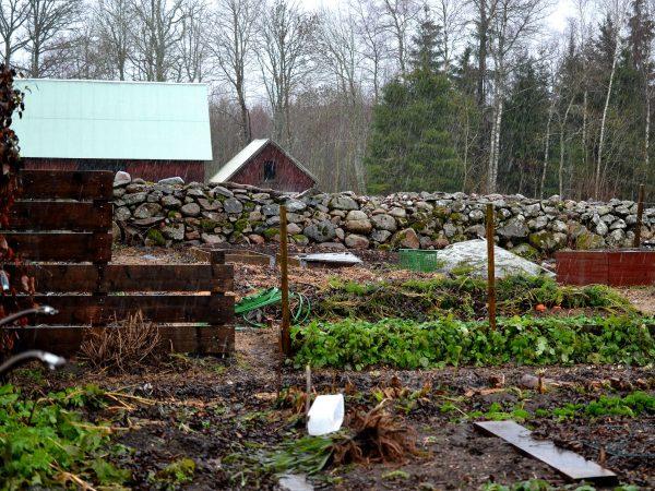 Köksträdgården i ösregn.