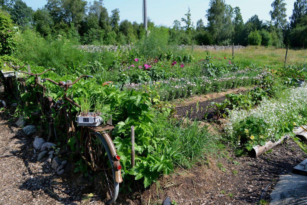 En grönskande köksträdgård.