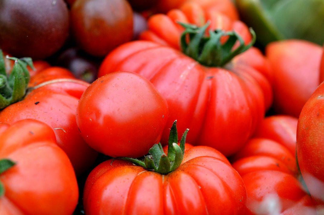 Mogna tomater i röda färger.