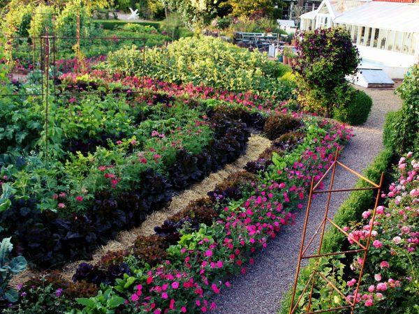 En vacker köksträdgård med tydliga rader där grönsaker står i olika mönster, varvade med färglada sommarblommor.