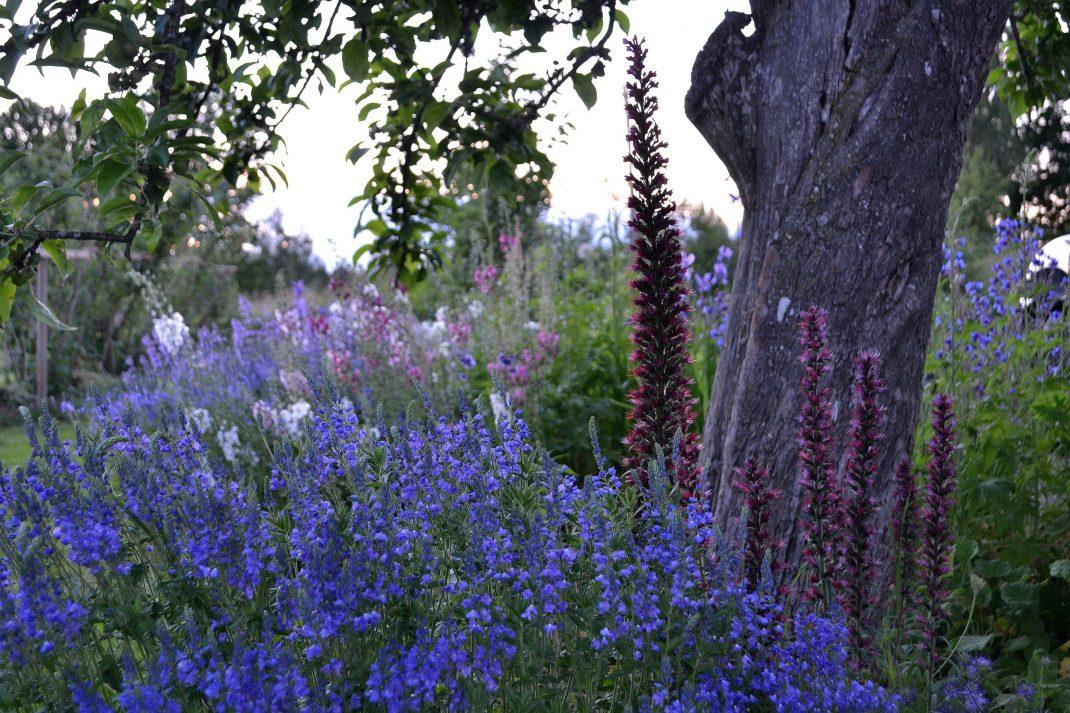 Perenner bommar i blått längs en gammal trädstam.