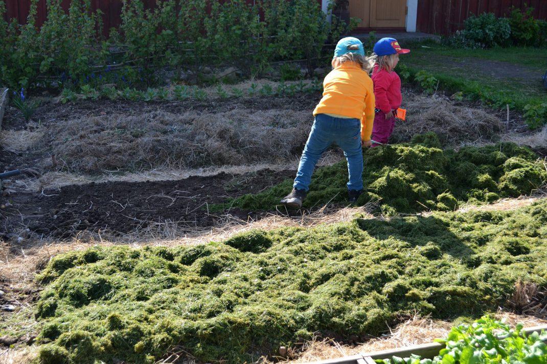 Samma kvarter som ovan fast höga bäddar täckta med gräsklipp täcker ytan.