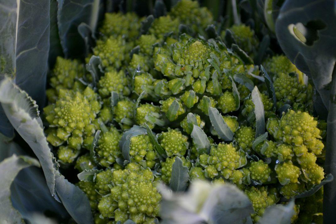 Ett vackert grönt huvud av broccolo.