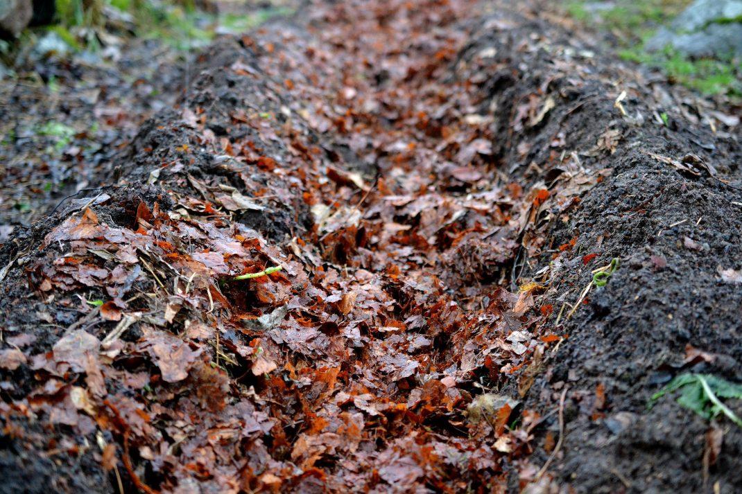 Löv ligger i en grävda rännan i mitten av bädden.
