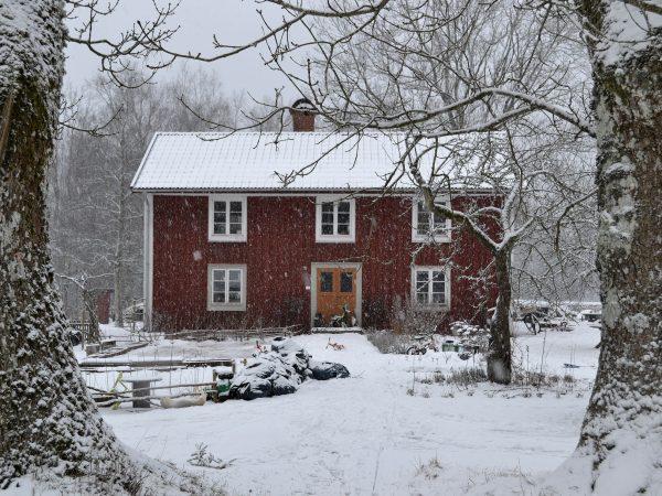 Det röda parhuset ramas in av två stora trädstammar, det snöar mycket.