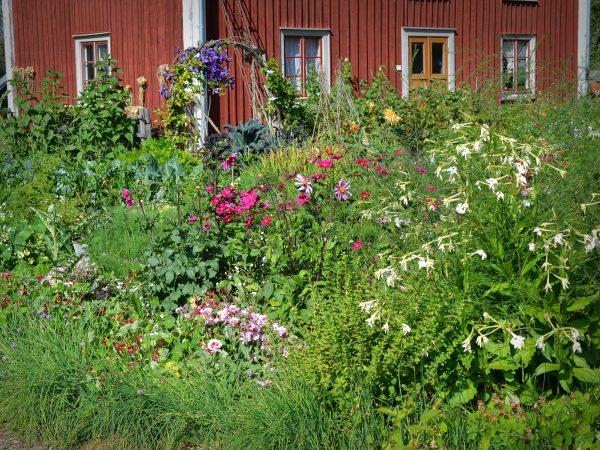 En blomstrande Skillnadens Trädgård i juli.