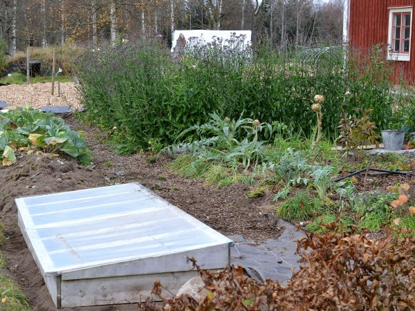 En odlingsram med plastlock på i köksträdgården.