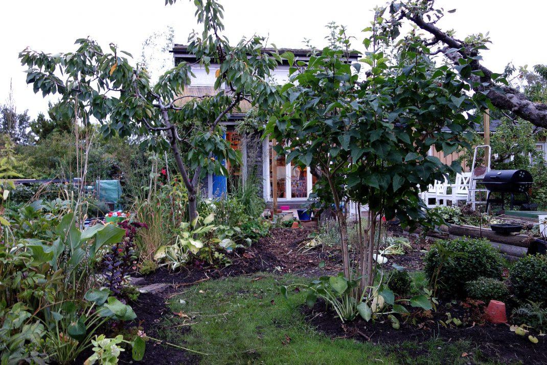 En frodig kolonilott med ett lustfyllt litet grått hus på.