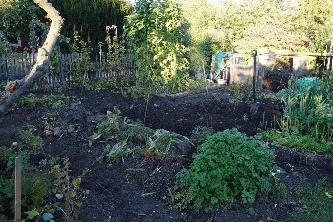 Upphöjda odlingsbäddar i trädgården.