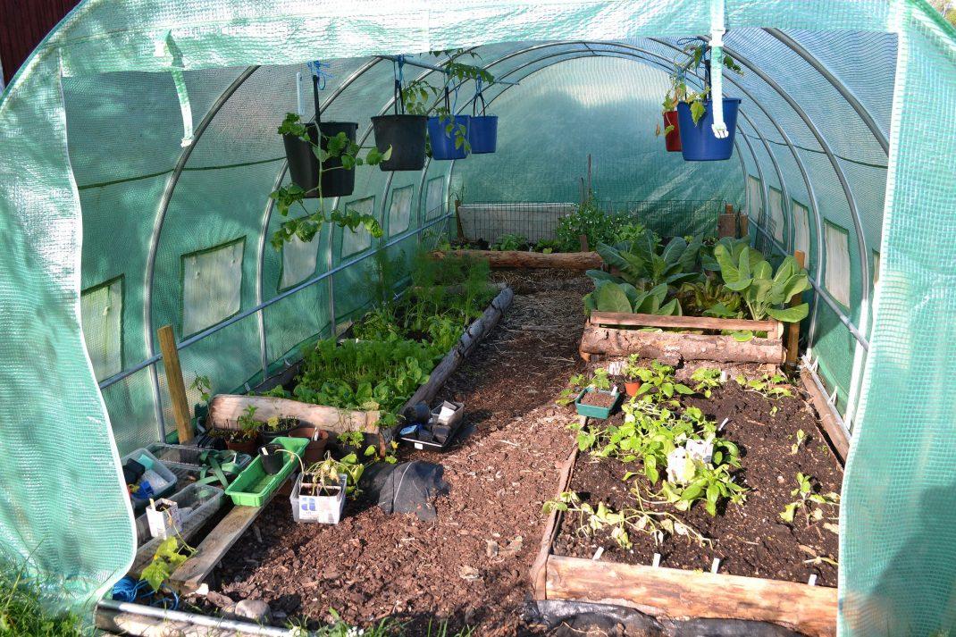 En odlingstunnel med grönsaker.